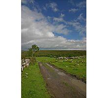 Irish Country Lane Photographic Print