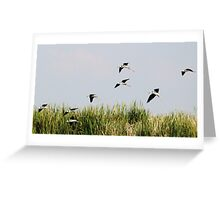Black-winged Stilts Greeting Card