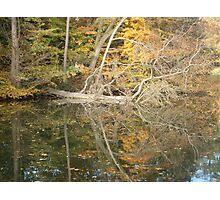 Autumn Almanac Photographic Print