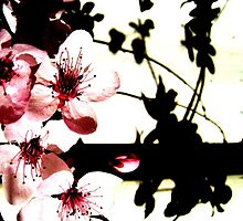 Blossoms and Shadows II by Kitsmumma