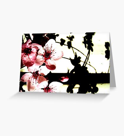 Blossoms and Shadows II Greeting Card