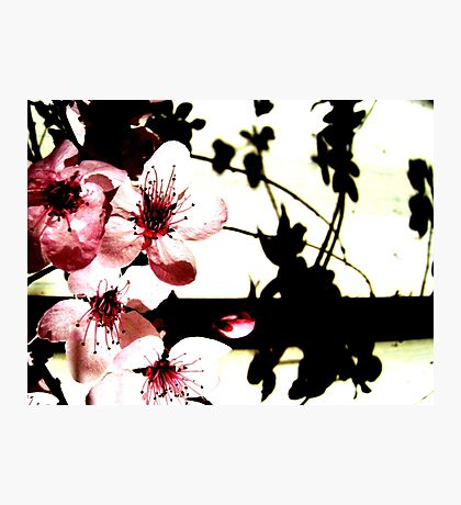 Blossoms and Shadows II Photographic Print