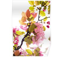 pink and green blossoms Poster