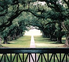 Oak Alley Plantation, Louisiana by intothewild1980