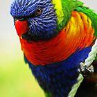 Rainbow Lorikeet by Evita