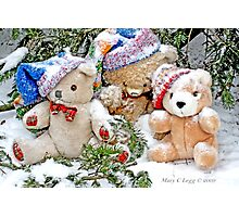 Three  Teddy Bear friends  in snow. Erasmus, Vintage and Little Red Panda  Bear Photographic Print