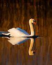 Mute Swan by Neil Bygrave (NATURELENS)