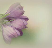 Spring embrace by Yool