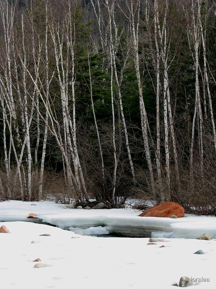 Thaw at Jack Pine River by loralea
