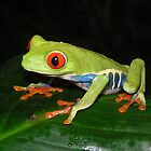Frog - (guady leaf frog) by Marieseyes