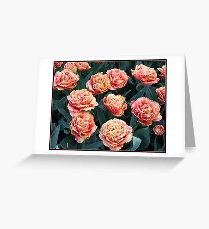 Frilled Tulips - Keukenhof Gardens, Holland Greeting Card