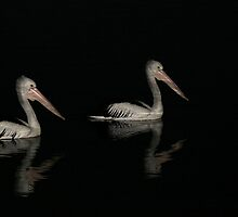 pelicans at night by footsiephoto