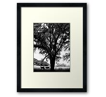 Country Life - Uralla, Rural NSW, Australia Framed Print