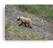 """Juvenile """"blond"""" grizzly  Canvas Print"""