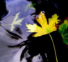 Leaves, Water, Reflection by Kitsmumma