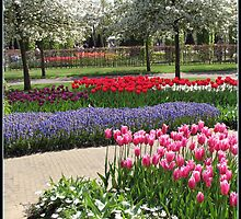 Rows of Colour - Keukenhof Gardens, Holland by BlueMoonRose
