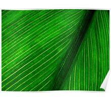 Nature's Pin Stripe Poster
