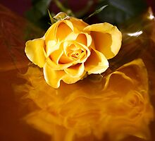 yellow rose on cellophane by Anna Goodchild