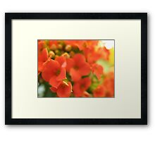 Tomato Cherry Red whipped Flowers Framed Print