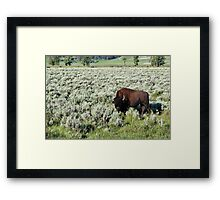 Lamar Valley, Yellowstone NP Framed Print
