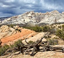 Split Mountain with Dead Wood by Kim Barton