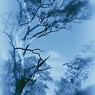 Forest Encounters in Blue by Lozzar Landscape