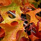 Autumn Diamonds by Janice E. Sheen