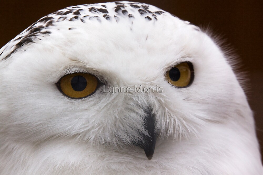 Up Close And Personal by Lynne Morris