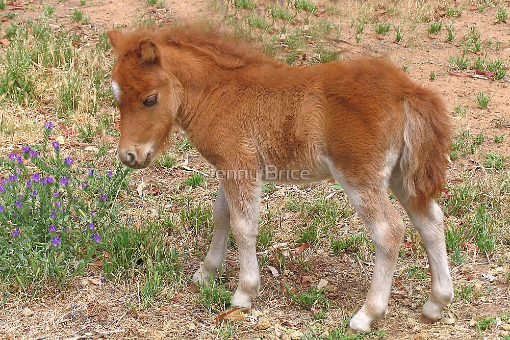 Foal Sniffing Flowers by Jenny Brice