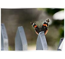 Butterfly Fly By  Poster