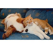 cat and dog Photographic Print