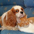 dog and cat by footsiephoto