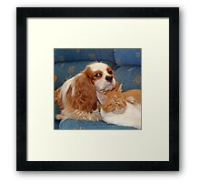 dog and cat Framed Print