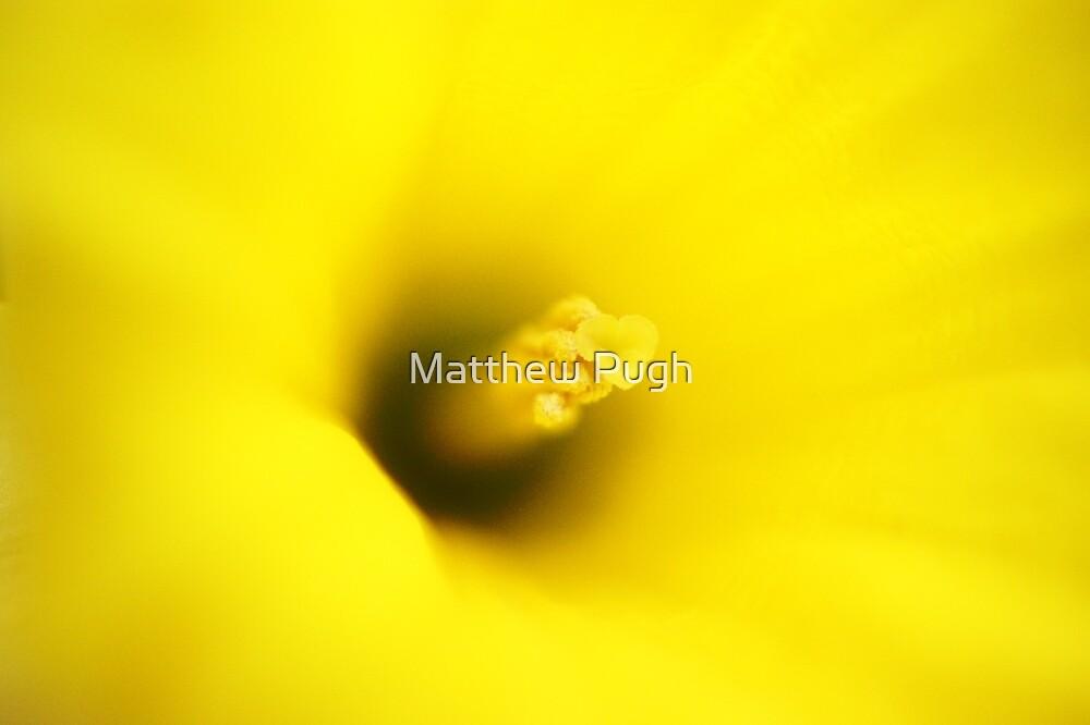 Narcissus by Matthew Pugh