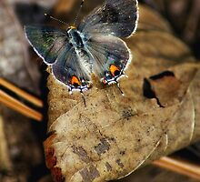 Resting Butterfly by Christy Grimes