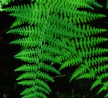 Ferns in the Light Sticker