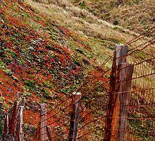 Big Sur Fence Line by ScottPhotos