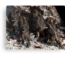 wild boar baby behinds Canvas Print