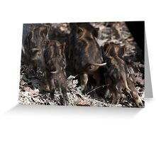 wild boar baby behinds Greeting Card