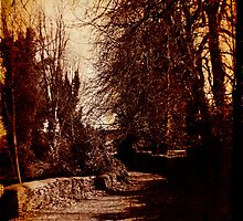 The Green Lane - Barnsley - in sepia by Daisy-May