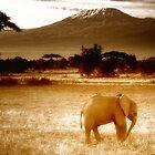 Africa Morning by Brendan Buckley