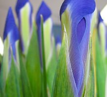 Blue Iris Celery Sticks by MarianBendeth