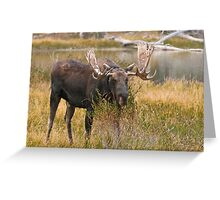 Bull Moose II Greeting Card