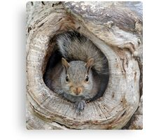 The Agency Finally Sent Over A Squirrel I Could Work With Metal Print