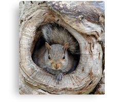 The Agency Finally Sent Over A Squirrel I Could Work With Canvas Print