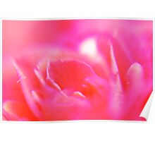 rose abstract Poster