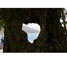 Hearted bark Photographic Print
