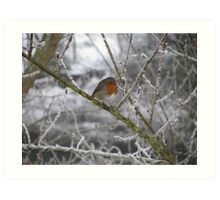 Robin and Winter Scene Art Print
