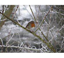 Robin and Winter Scene Photographic Print