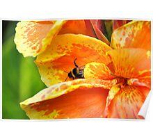 Amber nectar Poster